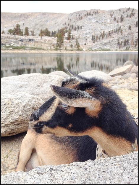 Scout at Lake