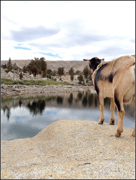 Scout Looking at Lake
