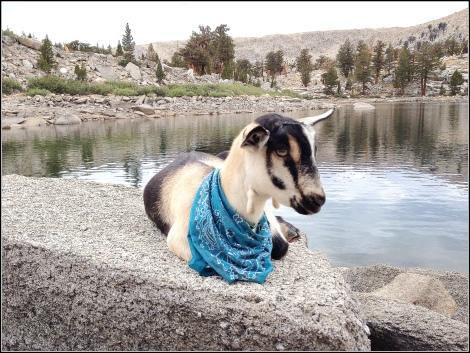 Sterling at Lake